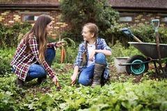 Cultivez le concept saisonnier de croissance de nature de jardin photo libre de droits