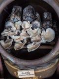 Cultivez les champignons image libre de droits