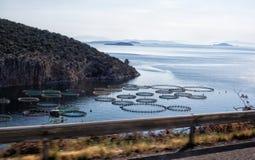 Cultivez pour l'élevage des moules et des huîtres Photos libres de droits