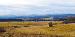 Cultivez près des montagnes rocheuses Photographie stock