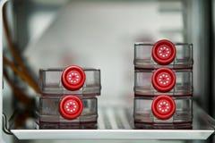 Cultivo celular en refrigerador del hospital Foto de archivo libre de regalías