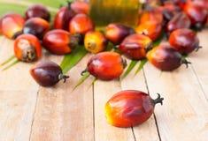 Cultivo comercial del aceite de palma Puesto que el aceite de palma contiene más sa Foto de archivo
