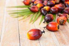 Cultivo comercial del aceite de palma Puesto que el aceite de palma contiene más sa Imágenes de archivo libres de regalías