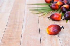 Cultivo comercial del aceite de palma Puesto que el aceite de palma contiene más sa Imagen de archivo