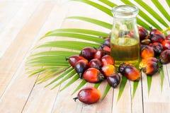 Cultivo comercial del aceite de palma Puesto que el aceite de palma contiene más sa Imagen de archivo libre de regalías