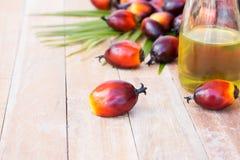 Cultivo comercial del aceite de palma Puesto que el aceite de palma contiene más sa Fotos de archivo
