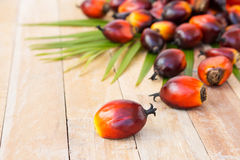 Cultivo comercial do óleo de palma Desde que o óleo de palma contém mais sa Imagens de Stock Royalty Free