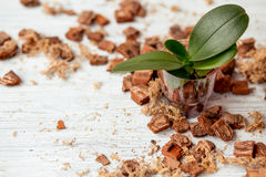 Cultivo da planta Foto de Stock