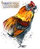 Cultivo de aves domésticas A galinha produz a série pássaro doméstico da exploração agrícola Foto de Stock Royalty Free