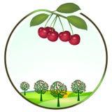 Cultivo de la cereza Imágenes de archivo libres de regalías