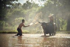 Cultivo de la estación de lluvias Fotografía de archivo libre de regalías