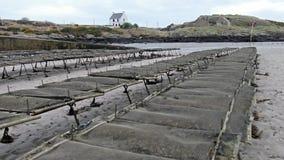 Cultivo de la ostra y trampas de la ostra, bolsos flotantes de la malla por Carrickfinn en el condado Donegal, Irlanda almacen de metraje de vídeo