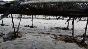 Cultivo de la ostra y trampas de la ostra, bolsos flotantes de la malla por Carrickfinn en el condado Donegal, Irlanda almacen de video