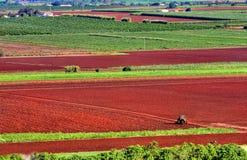 Cultivo de la tierra roja imagen de archivo
