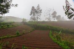 Cultivo de las terrazas en montañas tropicales fotografía de archivo