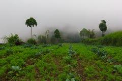 Cultivo de las terrazas en montañas tropicales imagenes de archivo