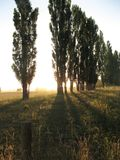 Cultivo de puesta del sol imagen de archivo