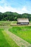 Cultivo de Shirakawa Fotografia de Stock