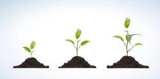 Cultivo de uma planta nova Imagens de Stock Royalty Free