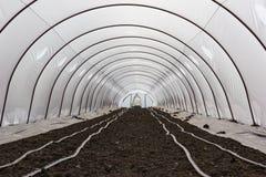 Cultivo del invernadero Fotografía de archivo