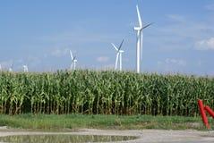 Cultivo del viento y del maíz Fotos de archivo libres de regalías