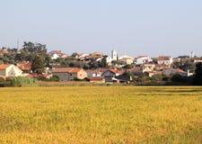 Cultivo do arroz perto de Vinha a Dinamarca Rainha, Portugal Imagem de Stock Royalty Free