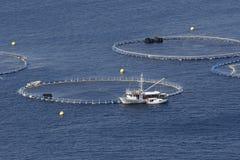 Cultivo do atum Fotografia de Stock Royalty Free