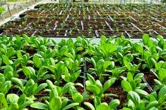 Cultivo do solo orgânico fotografia de stock