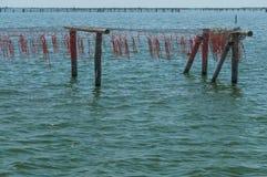 Cultivo dos mexilhões, lagoa de Scardovari, mar de adriático, Itália Fotografia de Stock