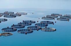 Cultivo dos peixes Fotografia de Stock Royalty Free