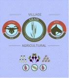 Cultivo e colheita do infographics do vintage Imagens de Stock Royalty Free