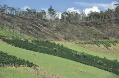 Cultivo e desflorestamento em Brasil Imagem de Stock