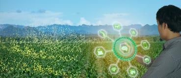 Cultivo elegante de Iot, agricultura en la industria 4 0 tecnolog?as con concepto de la inteligencia artificial y del aprendizaje foto de archivo