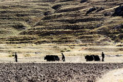 Cultivo em tibet Foto de Stock Royalty Free