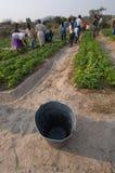 Cultivo em Zimbabwe Imagem de Stock