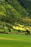 Cultivo en el volcán #1 Fotografía de archivo