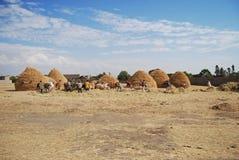 Cultivo en Etiopía Imagen de archivo libre de regalías