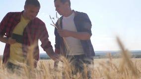 Cultivo esperto dos trabalhos de equipe Dois fazendeiros trabalham em um campo de trigo Os fazendeiros exploram estão estudando H vídeos de arquivo