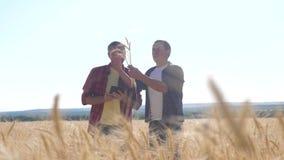 Cultivo esperto dos trabalhos de equipe Dois fazendeiros trabalham em um campo de trigo Os fazendeiros exploram estão estudando H video estoque