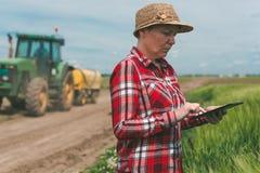 Cultivo esperto, usando a tecnologia moderna na atividade agrícola imagem de stock royalty free
