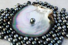 Cultivo negro de la perla Imagen de archivo libre de regalías