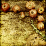 Cultivo orgánico de los tomates Imagen de archivo libre de regalías