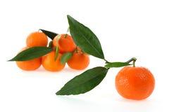Cultivo orgânico das clementina frescas, em um fundo branco Fotos de Stock