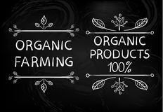 Cultivo orgânico Produtos orgânicos 100 Elementos tipográficos brancos tirados mão do projeto Imagem de Stock Royalty Free