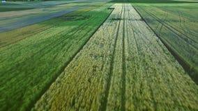 Cultivo rural de la agricultura del paisaje Campo verde de la cosecha de la hermosa vista almacen de video