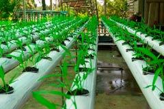 Cultivo soilless da estufa comercial dos vegetais fotografia de stock royalty free