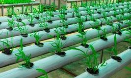 Cultivo soilless da estufa comercial dos vegetais fotografia de stock