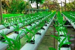 Cultivo soilless da estufa comercial dos vegetais fotos de stock royalty free