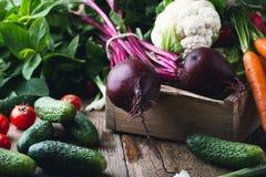 Cultivo vegetal Remolachas, rudishes, coliflor y zanahorias Foto de archivo libre de regalías