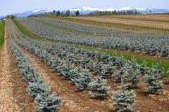 Cultivo y campo de árbol. imagen de archivo